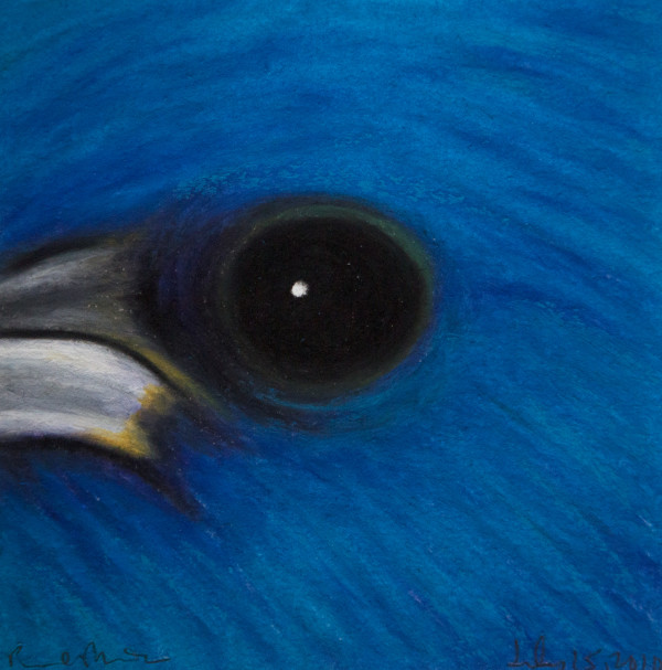 Indigo Bunting, July 15, 2010, oil pastel on paper by Rev. Paul Plante.