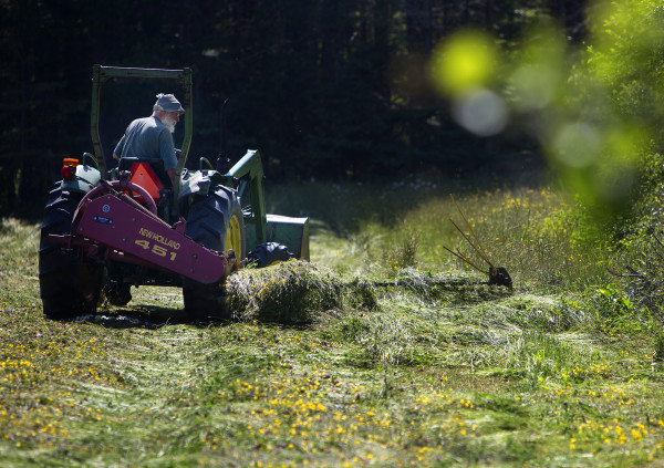 Bill Thayer cuts a section of hay at Darthia Farm in Gouldsboro Tuesday.