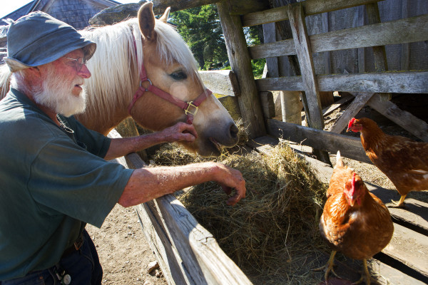 Bill Thayer spends some time with Star at Darthia Farm in Gouldsboro on Tuesday.
