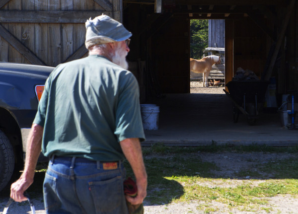 Bill Thayer walks over to feed the horses at Darthia Farm in Gouldsboro on Tuesday.