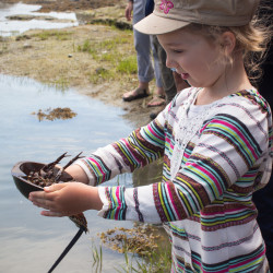 Live horseshoe crabs to appear at Maine State Museum