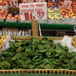 Fiddlehead ferns are popular seasonal items in New York City fresh produce markets, and they command prices far above what they get in northern Maine, where they have been traditional forage food for generations.
