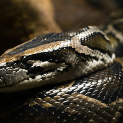 Giant snake spotted in Rumford canal