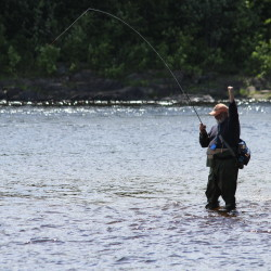 Return of the shad: Anglers target Penobscot after 150-year hiatus
