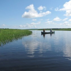 Join the Friends of Sunkhaze Meadows NWR on June 18 for Birding my Boat