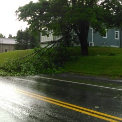 Downed trees reported in wake of severe weather in parts of Maine