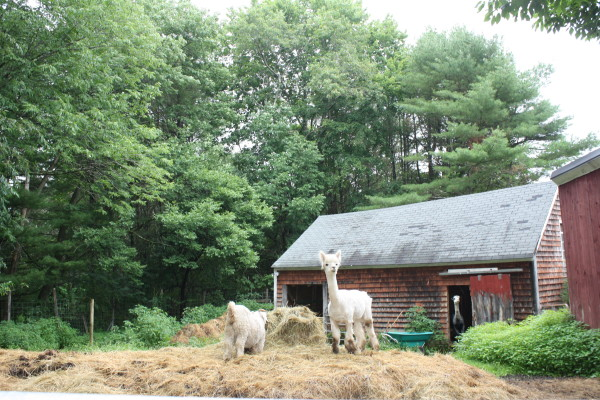 These animals and many others await your arrival at Open Farm Day July 24 across the state.