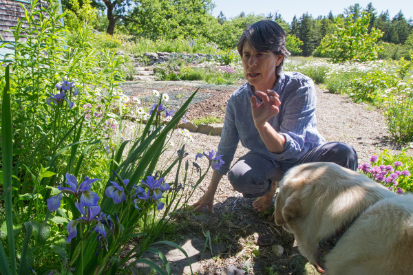 Heather McCargo, founder and executive director of the Wild Seed Project, kneels by blue irises in bloom on June 17 in her garden in Brooksville. The irises are native to Maine and are one of 60 species of plants sold by the Wild Seed Project in seed form.