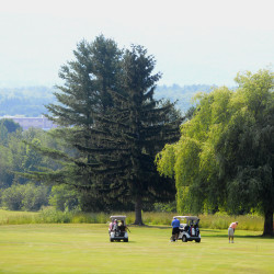 Golfers compete on the first day of the 50th annual Greater Bangor Open golf tournament Thursday morning at the Bangor Municipal Golf Course.