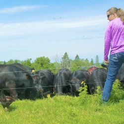 Erin Parisien looks over her herd of Black Angus beef cattle at Aroostook Beef Co. with some on the ground help from one of her chickens.