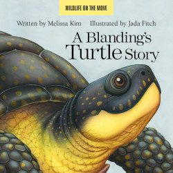 """The cover of """"A Blanding's Turtle Story,"""" published in May 2016 by Islandport Press."""