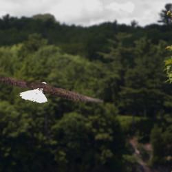 Eagles threaten coastal seabirds