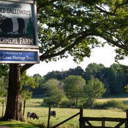 Aldermere Farm's Belted Galloways will be inspiration for plein air artists on July 20.