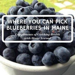 Fresh, Delicious, Organic Wild Maine Blueberries Still Available...but not for long!