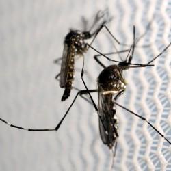Florida Keys considering drones to help eradicate mosquitoes