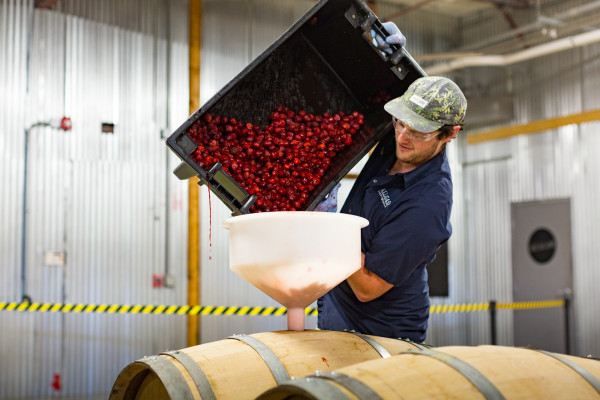 Evan Culver, brewer at Allagash Brewing Co., adds fresh strawberries from Doles Orchard to a Belgian ale.