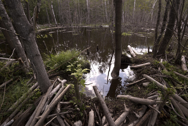A beaver bog along the northern access road to the new Katahdin Woods and Waters National Monument. President Barack Obama designated roughly 87,000 acres of land East of Baxter State Park as the new Katahdin Woods and Waters National Monument on Wednesday morning.