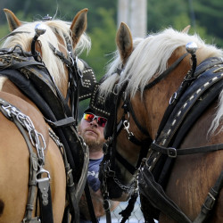 "Seth Elderkin of Parkman gets Belgian draft horses Mitch and Molly ready for the Farm Horse Scoot competition on Friday at the Piscataquis Valley Fair in Dover-Foxcroft. ""I'm not that competitive,"" said Elderkin, who has only been competing for a couple of years.  ""I'm just here to have a good time."""