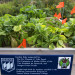 Raised garden beds filled with various plants can be seen on Aug. 25 at the Brewer Housing Authority.