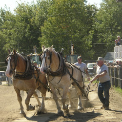 Blue Hill Fair a family affair