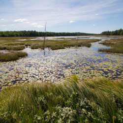 National Junior Ranger Day - Saturday, May 20, from 1 - 4pm at Schoodic Institute in Winter Harbor