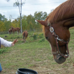 "OPEN FARM ""Brush Hours"" You're invited to pet a horse!"
