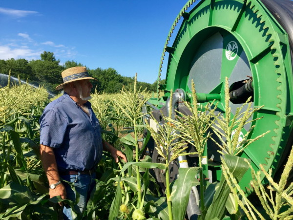 Farmer Bill Harris inspects the irrigation system that is keeping his acres of sweet corn alive during a severe drought in southern Maine.