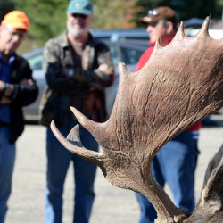 Spectators watch as moose are brought to the Ashland tagging station on the first day of the 2015 Maine moose hunting season.