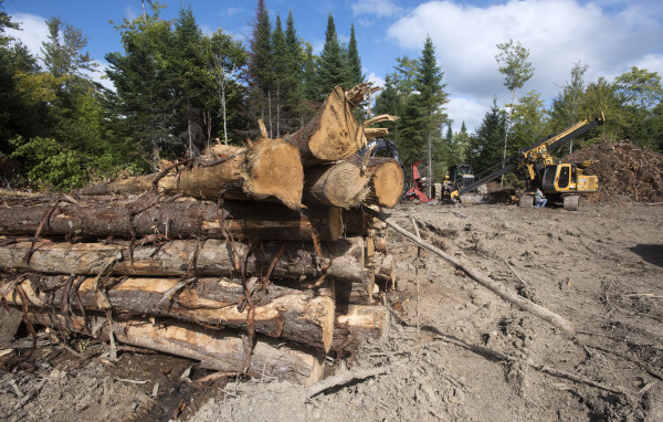 Harvested trees and equipment can be seen in Patten in this September 2016 file photo.
