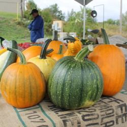 Pumpkins from Au Jardin are seen for sale at the Madawaska Farmers' Market, Sept. 14, 2016.