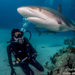 Carolyn Wheeler, a graduate student at the University of New England, scuba dived with tiger sharks as part of several research trips.