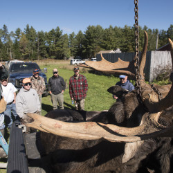 People look at a moose that was brought in to be tagged and weighed at the Gateway Variety store in Ashland Monday on the first day of moose hunting in 2016. This moose shot by Kenneth Hunt of Phippsburg weighed 965 pounds.