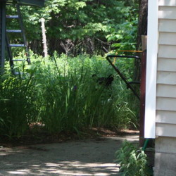 Bridgton dealt with a nuisance bear this summer.