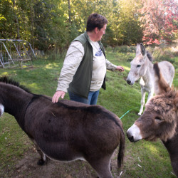 Rose Rapp with her pet donkeys at Farmetta Farm. She and her husband Wes Soper decided to close down the farm because of challenges in the business and their personal lives.