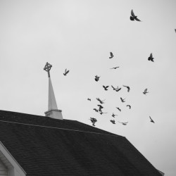 A photo illustration of pigeons landing atop St. Patrick's Episcopal Church in Brewer, which used to be St. Joseph's Church from the mid-1920s through the 1960s.