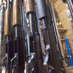 Rifles and shotguns for sale at Bill's Gun Shop in Orrington.