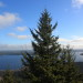 A tall evergreen tree obstructs an otherwise open view near on the top of Catherine Mountain on Nov. 23, 2012 near Franklin.
