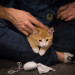 Kittens make the presidential debate more civilized in Portland