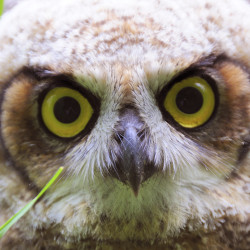 Owls Attack: Warnings posted at Bangor city forest