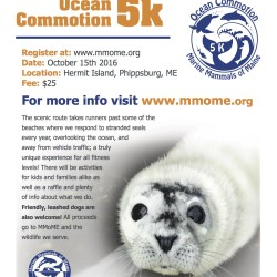 2nd Annual Ocean Commotion Flyer!