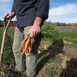 Drought in southern Maine leaves crops parched and farmers worried