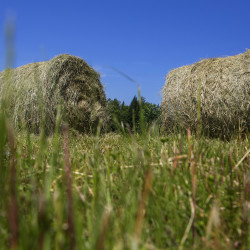Hay bails are seen at a farm in Monroe. The town of Winslow is working to try to help its remaining working farms stay the course -- by forgiving their local property taxes.