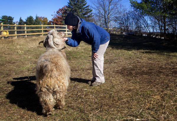 Daniella Tessier gives a pet to and kiss to a goat in the goat pasture at Peace Ridge in Brooks Tuesday. The farm animal sanctuary has a new, 800-acre home in Brooks where more pigs, chickens, goats and other rescued animals can live out their lives more freely.