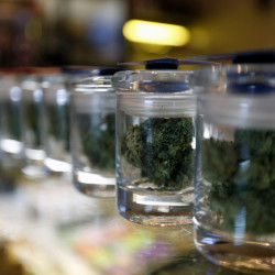 A variety of medicinal marijuana buds in jars at Los Angeles Patients & Caregivers Group dispensary in West Hollywood, California.