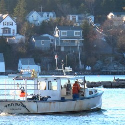 "STONINGTON, Maine -- 11/18/16 -- Isle Au Haut lobsterman Payson Barter maneuvers his vessel Perseverance through the harbor in Stonington after a day of fishing. Barter said the 2016 fishing season has been fruitful and that prices fishermen have gotten are ""about the same"" as they were in 2015, when the average annual price rose above $4 per pound for the first time since 2007."