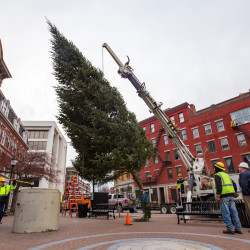 A Bangor Public Works crew installs Bangor's Holiday Tree in West Market Square on Tuesday morning. The balsam fir stands at over 35 feet tall, and was donated by Sprague's Nursery & Garden Center from a private property in Levant.