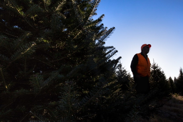 Steve Sherman, the first assessor in Oxbow Plantation, led his community through the process of deorganizing, culminating in a final town vote Nov. 8. He's pictured on his Christmas tree farm in Oxbow on Nov. 7, 2016.