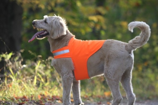 Max the dog displays a Dog Not Gone Safety Dog Vest. Dog Not Gone, a small company based in Kingfield, is owned by Julie and Bob Swain and manufactures its products at Maine Stitching Specailties in Skowhegan. The Safety Dog Vest was the company's first product when it was established in 2005.