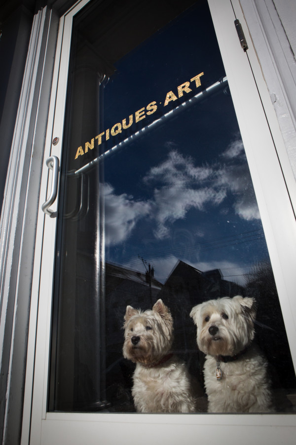 A pair of dogs look out of an antique store window on Route 1 in Wiscasset on Thursday.