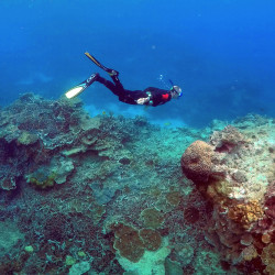 """A man snorkels in an area called the """"Coral Gardens"""" near Lady Elliot Island, on the Great Barrier Reef, northeast of Bundaberg town in Queensland, Australia, June 11, 2015."""